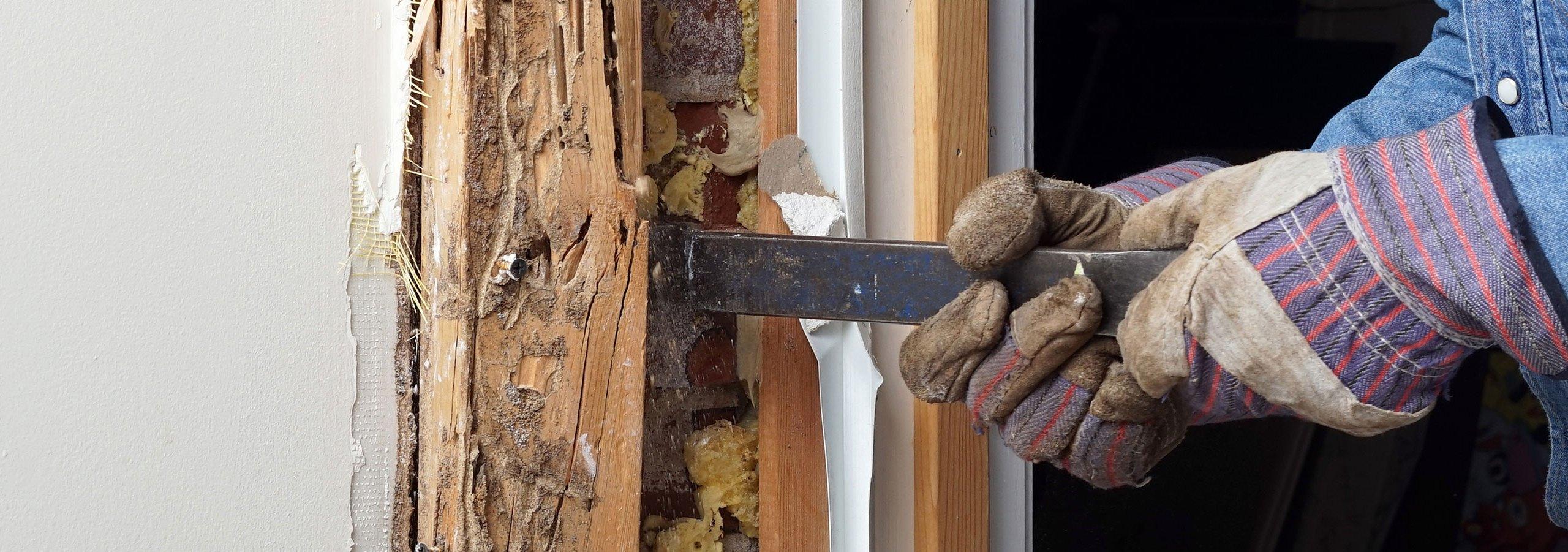 Termite Wall