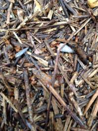 Nov 14 Termite Swarm 4